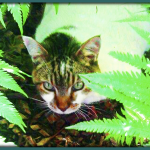 Jungle Cat: our lovely Hobbs, RIP.