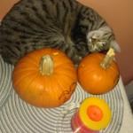 """Belle says, """"Happy Halloween...z-z-z-z-z."""""""