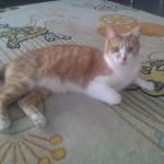 Eddie (Walter's housemate)